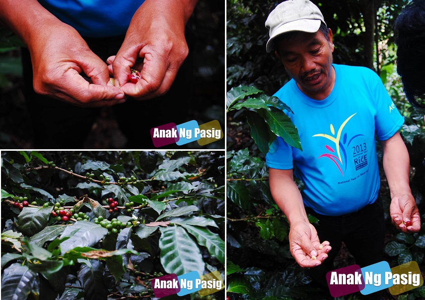 Organic Agriculture in the Philippines Part 2