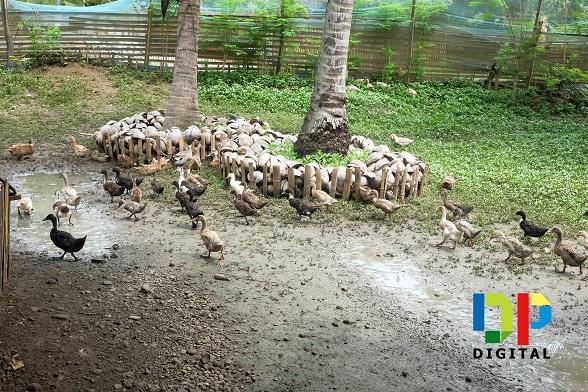 Buhian Diversified Farm 5